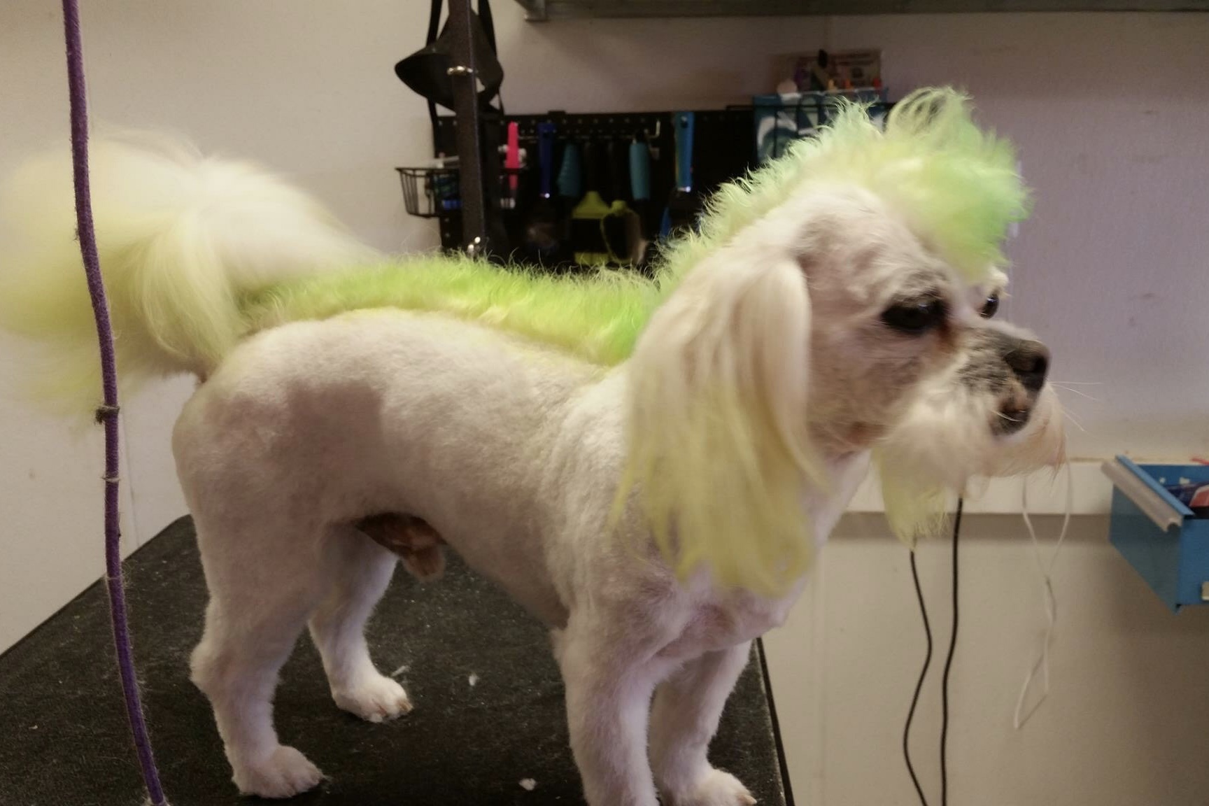 Video When Dog Groomers Fk Up Image 8