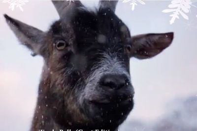 Video: Nothing Like A Goat Screaming Your Favourite Christmas Carols.