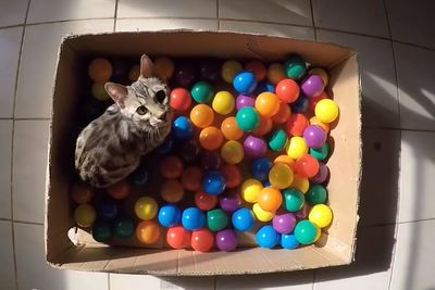 Video: Adorable Kitty Loves His Homemade Ball Pit.