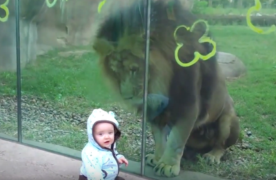 Video: Lion Trying To Attack A Baby At Zoo. You Won't Believe What Happens Next!