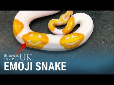 Video: Wanna See The First Emoji Snake?... Watch The Video Here!