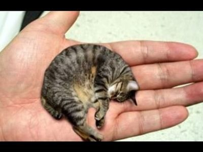 Video: Smallest, Most Adorable Animals On The Planet!