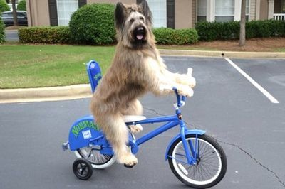 Video: This Dog Can Sit, Fetch And Ride A Bike!