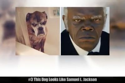 Video: Animals That Look Exactly Like Celebrities