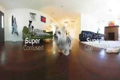 Video: What Do Your Pups Do Home Alone?