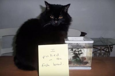 Video: Hilarious Asshole Cats Shamed For Their Crimes!
