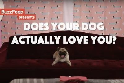 Video: Do Your Dogs Actually Love You?