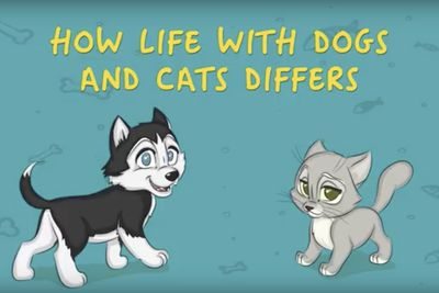 Video: Owning A Cat Vs. Owning A Dog