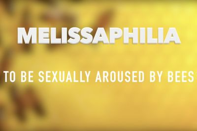 Video: The Strangest Sex Fetishes...