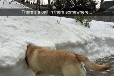 Video: Dogs Who Just Couldn't Contain Their Joy In The Snow!