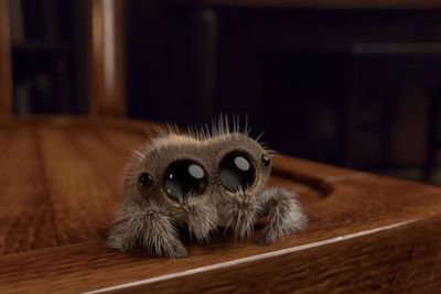 Video: Apparently Spiders Aren't So Terrifying If They Are Named Lucas