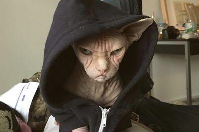Video: Meet Loki, The New Grumpy Cat!