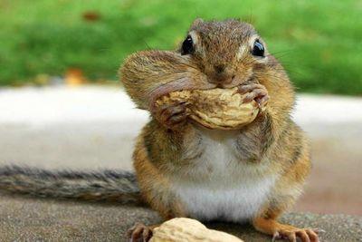 Video: Pole Dancing Squirrels?