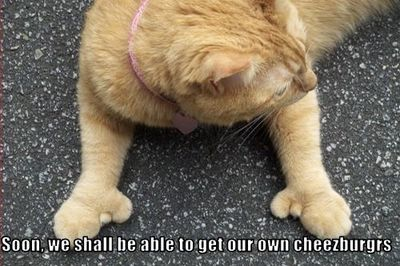 Cats With Thumbs Will Soon Be Able To Make Their Own Cheeseburgers!