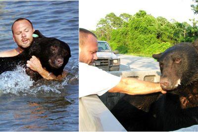 Brave Man Saves a 375 Pound Drowning Bear