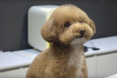 Dog Grooming Video You Never Knew You Needed