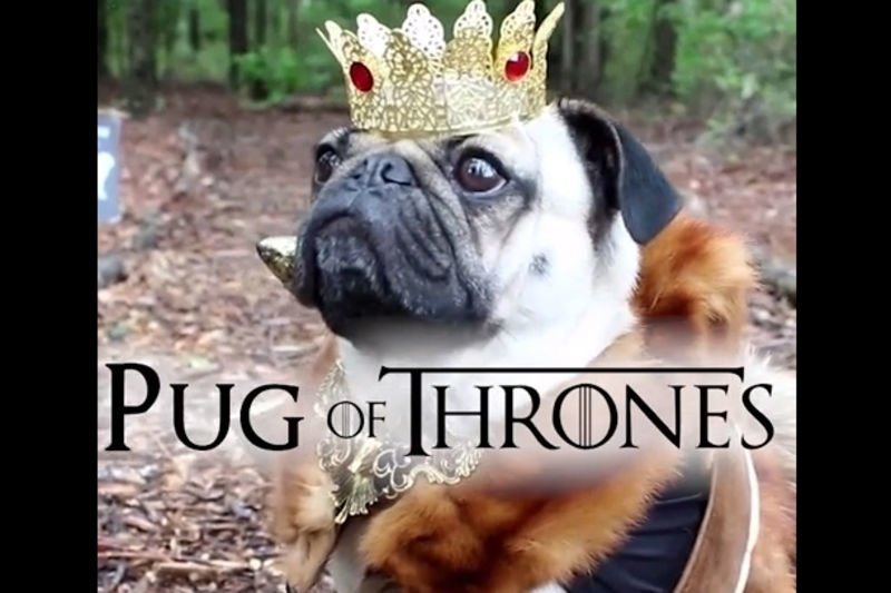 Adorable Pugs Dressed Up As Your Favourite Tv Series Characters! 1