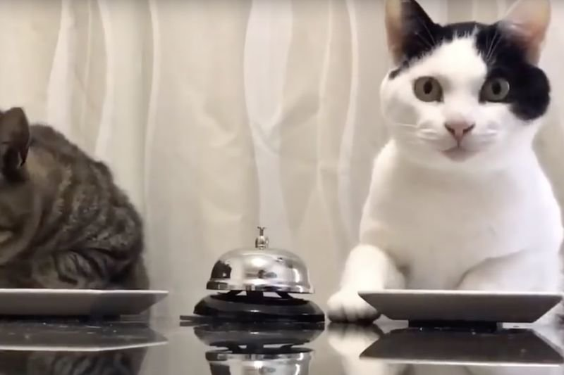 Video Clever Cats Ringing A Bell To Get More Food