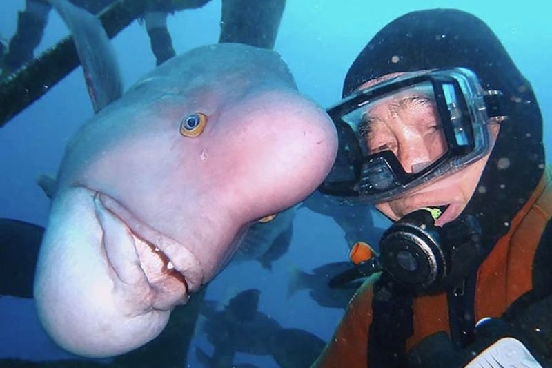 Video: See How A Scuba Diver Found A Good Friend Under The Sea!! 1