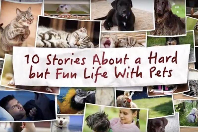 Video: 10 Stories Proving That Life Can Never Be Boring With Pets! 1