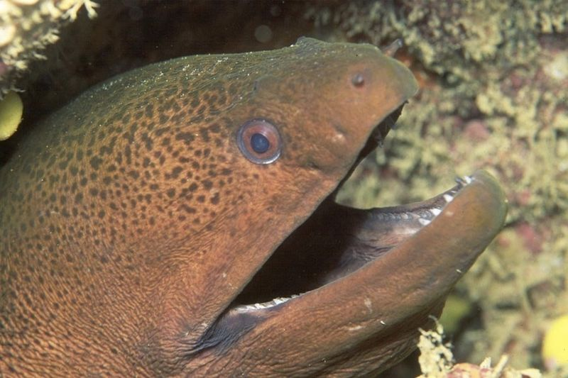 Eels Are Getting High On Your Cocaine Stash 1