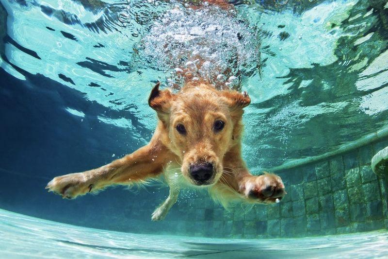 Happy National Dog Day! 1