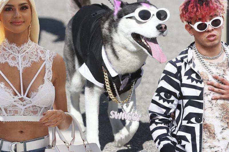 Swaggy Wolfdog