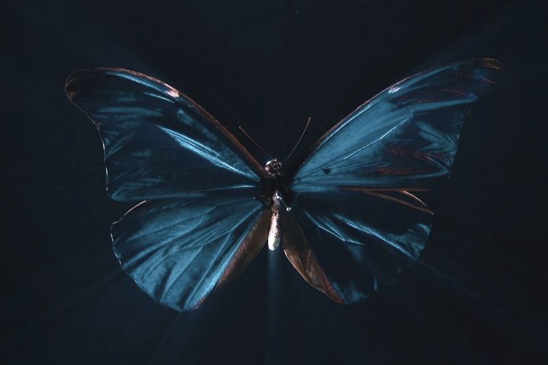 Extraordinary Examples Of The Butterfly Effect 1