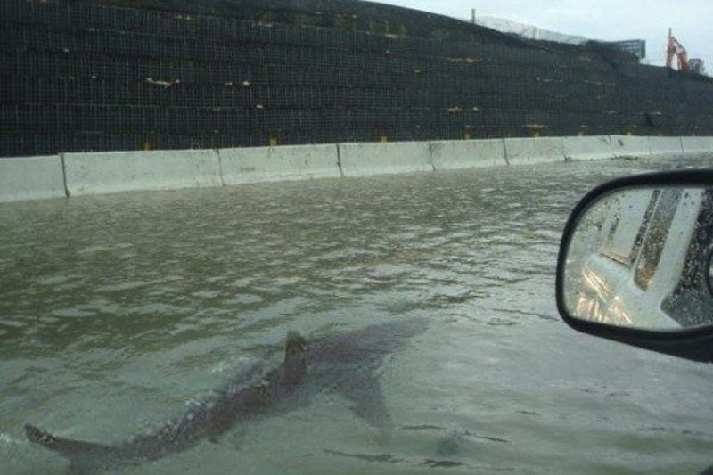 What Happens To Fish During A Hurricane 1