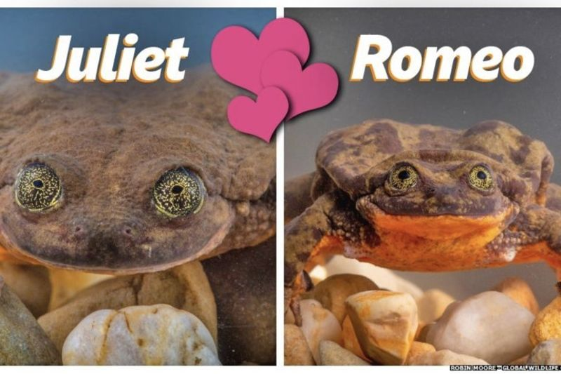 Loneliest Frog Has Found A Match After 10 Years 1