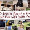 Video-10-Stories-Proving-That-Life-Can-Never-Be-Boring-With-Pets