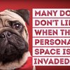 Video-12-Things-Your-Dog-Hates