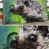 Street Artist Turns Rubbish into Street Art – Meet Bordalo II 12